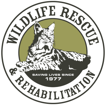 Wildlife Rescue & Rehabilitation