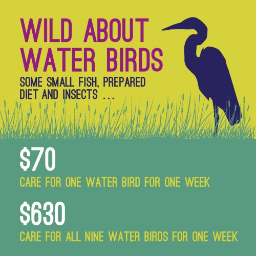 Water-Bird-Infographic