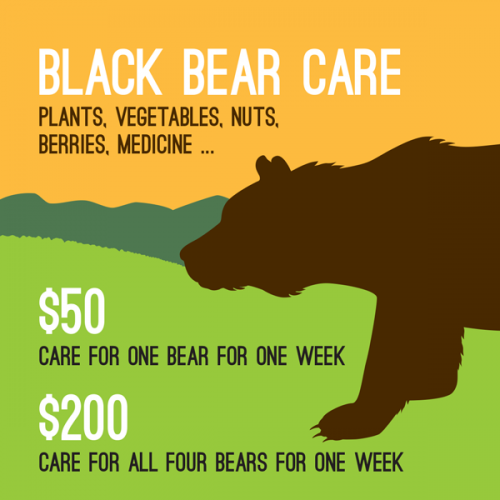 Bear-Infographic