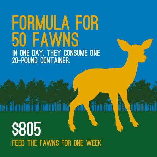 Fawn-Infographic